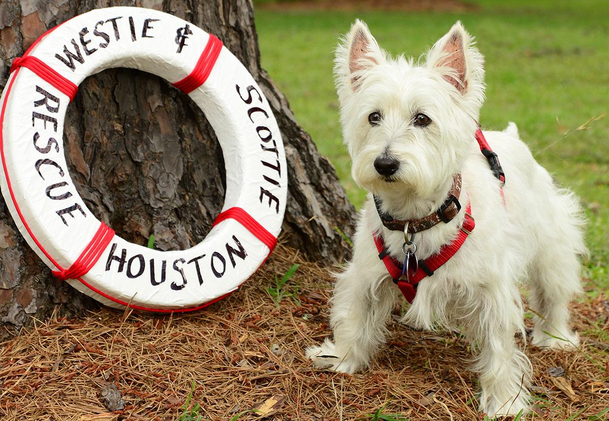 Home - Westie & Scottie Rescue Houston